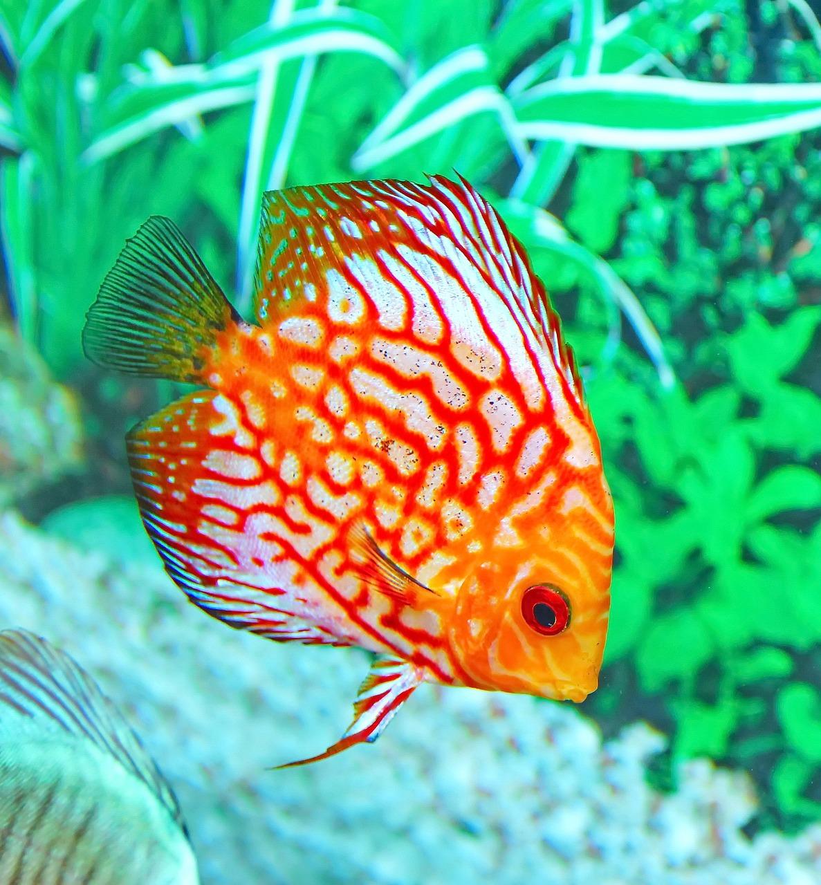 Aquarium einrichten einfach