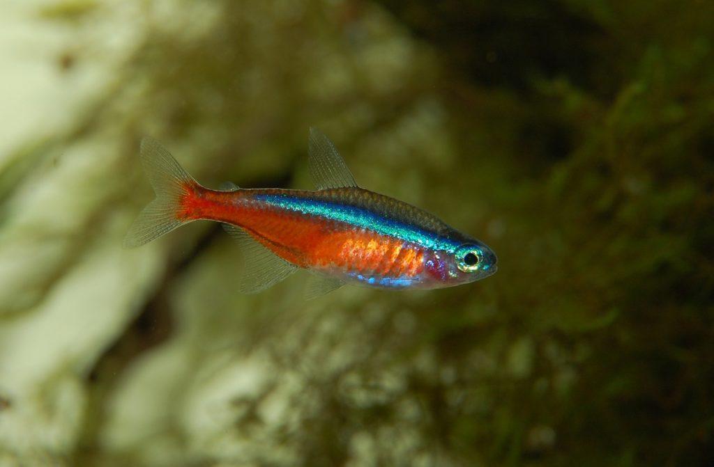 Aquarium einrichten Neon
